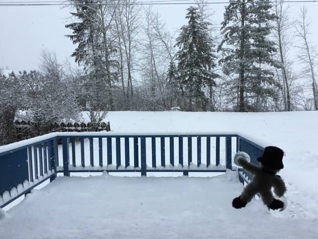 A campaign reboot view in snowy Salmon Arm, B.C.